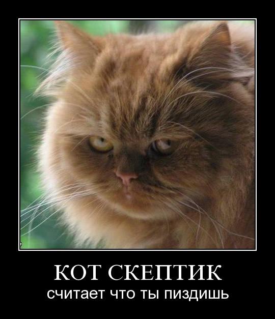 Демотиватор про кота-скептика