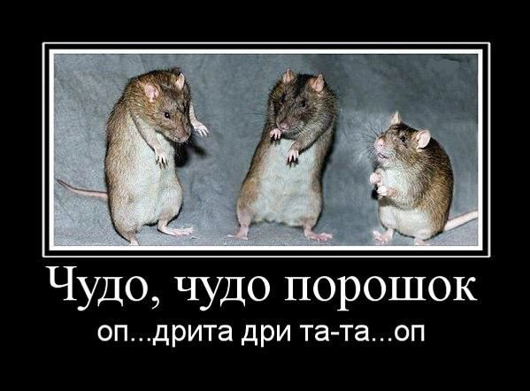 Демотиватор с веселыми мышками