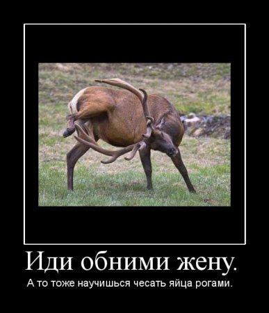 Демотиватор про оленя