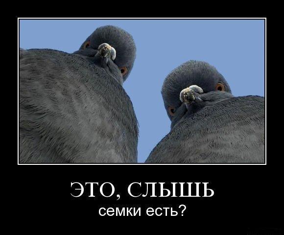 Демотиватор - голуби-гопники