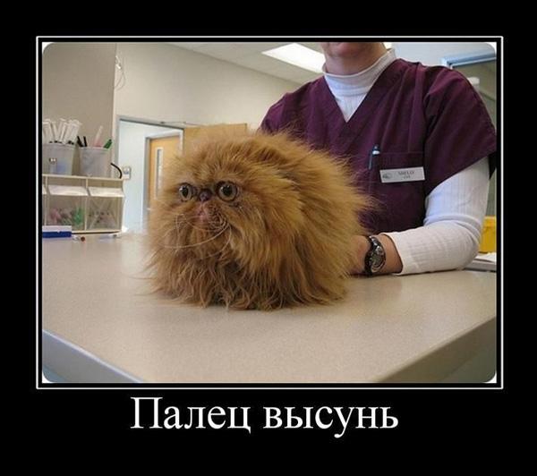 Демотиватор - кот и палец