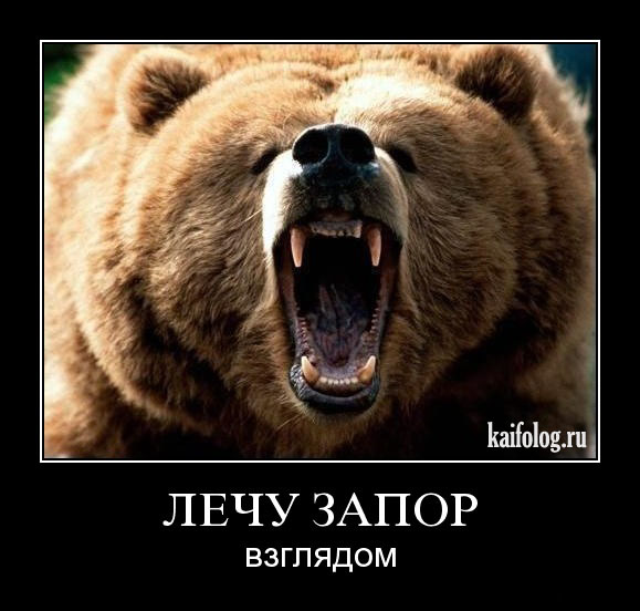 Демотиватор - медведь лечит запор взглядом :)