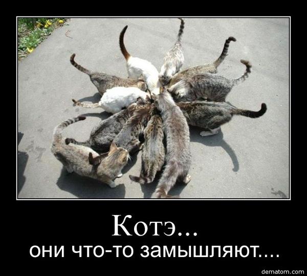 Демотиватор - дюжина котэ
