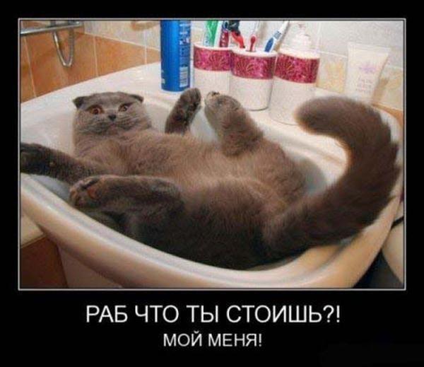 Демотиватор - кот в раковине