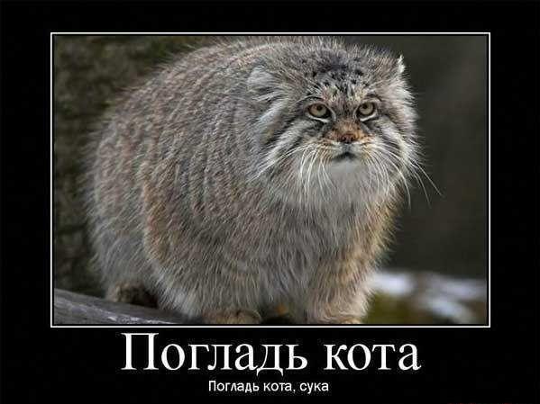 Демотиватор - погладь котика!